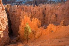 Gorge de Bryce Photo libre de droits
