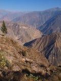 Gorge de Colca Photo libre de droits
