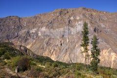 Gorge de Colca, Pérou image stock