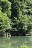 Gorge de Dakigaeri image libre de droits