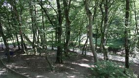Gorge de Dantovo à proximité de la ville de Goryachiy Klyuch Russie clips vidéos