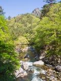Gorge de Shosenkyo en vert frais à Kofu, Yamanashi, Japon photo libre de droits