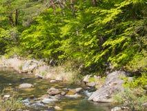Gorge de Shosenkyo en vert frais à Kofu, Yamanashi, Japon image stock