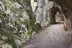 Gorge des soins de rivière en Asturies photo stock