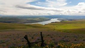 Gorge du fleuve Columbia avec le laps de temps de fleurs sauvages et de nuages banque de vidéos