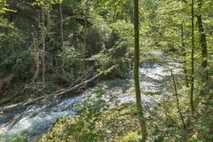 Gorge et rivière Radovna de montagne de Vintgar Saigné, la Slovénie photo libre de droits