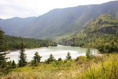 gorge fleuve Russie Sibérie de région de katun d'altai Image stock