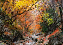 Gorge of the Grand Canyon of Crimea Stock Photos