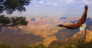 Gorge grande Etats-Unis Image stock