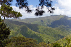 The gorge of the mountain river in Africa. Park  Black river Gorge . Mauritius Royalty Free Stock Photography