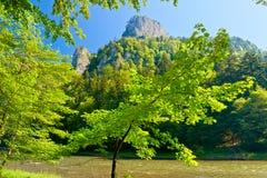 The gorge of mountain river. Stock Photos