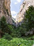 Gorge of the Rhodope Mountains, abundantly overgrown with deciduous and evergreen forest Stock Photos