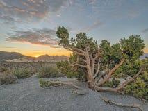 Gorge rouge de roche, Nevada photos stock