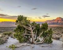 Gorge rouge de roche, Nevada image stock