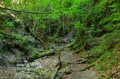 Gorge of Slovak Paradise Royalty Free Stock Images