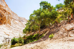 Gorge with a stream and vegetation Royalty Free Stock Photo