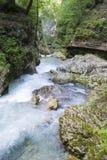 Gorge Vintgar Стоковое фото RF