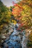 Gorgeous automne riverstream. Stock Photo