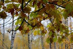 Gorgeous autumn Royalty Free Stock Photography