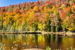 Gorgeous Autumn Colors in the Adirondacks under Blue Sky Stock Photos