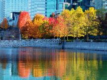 Gorgeous autumn foliage is reflected in nearby waters Royalty Free Stock Photos