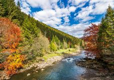 Gorgeous autumn landscape in mountains. Small river flows through rural valley among coniferous forests. few trees in red and yellow foliage Stock Photos