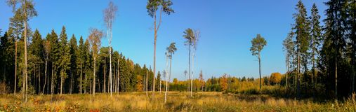 Gorgeous autumn landscape panorama Royalty Free Stock Photography