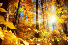 Gorgeous autumn sunlight in a forest stock photo