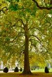 Gorgeous autumn tree Stock Image