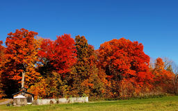 Gorgeous autumn trees. Royalty Free Stock Images