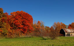 Gorgeous autumn trees under blue sky. Royalty Free Stock Photos