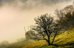 Naked tree on hillside in fog at sunrise. Gorgeous autumnal countryside scenery with naked tree and haystack on hillside in fog at sunrise Stock Photography