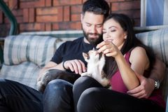 Gorgeous beautiful young couple holding cats in hands Royalty Free Stock Images
