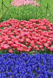 Gorgeous bed of colorful variety of flowers in landscaped garden royalty free stock image