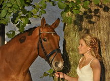 Gorgeous blond girl with a horse Stock Photos