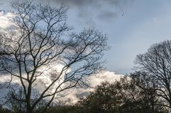Gorgeous blue cloudy sky scene with clouds. And trees with birds with birds sitting on the branches stock photo