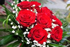 Gorgeous bouquet of red roses. With a drop of white and green edges stock images