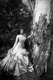 Gorgeous bride in black and white Stock Photography