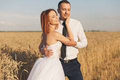 Gorgeous bride and groom in wheat field. Happiness and marriage Royalty Free Stock Images