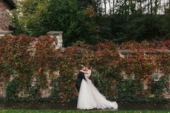 Gorgeous bride and stylish groom gently hugging and smiling at. Old wall of autumn red leaves. Happy sensual wedding couple embracing. Romantic moments of stock photography