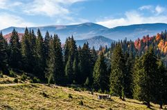 Gorgeous Carpathian mountain landscape in autumn Stock Images