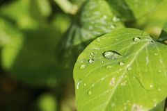 Gorgeous close up macro view of green leaf with raindrops. Beautiful green nature backgrounds royalty free stock image