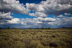 Gorgeous Clouds over the Prarie. Blue sky, big white puffy clouds above a prarie of sagebrush Royalty Free Stock Photo