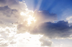Gorgeous clouds, sun rays coming through. Bird flying in the air Royalty Free Stock Photo
