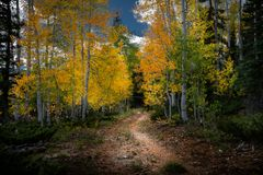Gorgeous colored leaves on a path in a beautiful forest. During the autumn season stock photos