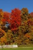 Gorgeous colorful autumn trees. Royalty Free Stock Image