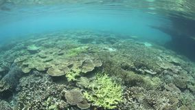 Gorgeous Coral Reef stock footage