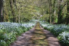 Gorgeous Country Lane Toward a Country House. This beautiful country lane is located in Devon England.  A fine example of what can be found when exploring the Royalty Free Stock Photo