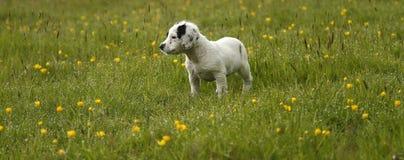 Gorgeous Cute Puppy Stock Photos