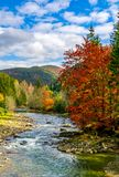 Gorgeous day near the forest river in mountains. Deciduous tree with vivid red foliage among spruce on the curve rocky shore. dreamy autumnal landscape Stock Photos